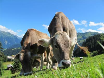 Alpelandet Østrig - 277