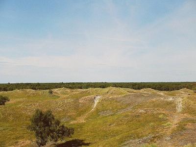 Indlandsklitter ved Højsande, Læsø - 554