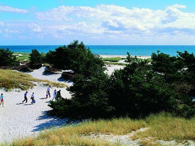 Dueodde strand, klitter - 74